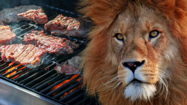 Lion Gas Grills — Time for a Cooking Upgrade?